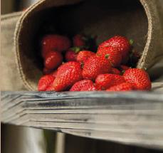 Biomärkte mit Naturholz-Regalsystem